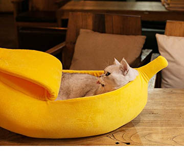 cat house and bed