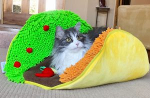 Taco Bed Gifts for Dogs