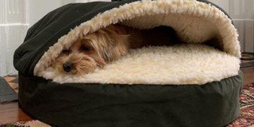 Orthopaedic Dog Bed
